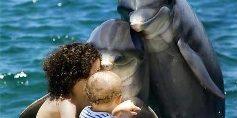 delfinia mama humans