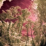 a,bessho onsen forest,japan